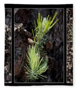 Ponderosa Pine Wide Fleece Blanket