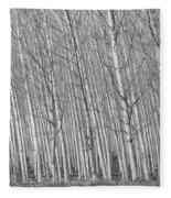 Poplars Beauty Trees Fleece Blanket