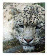 Portrait Of A Snow Leopard Fleece Blanket