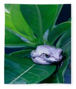 Portrait Of A Tree Frog Fleece Blanket