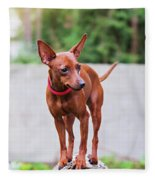 Portrait Of Red Miniature Pinscher Dog Fleece Blanket
