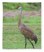Posing Sandhill Fleece Blanket