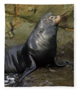 Posing Sea Lion Fleece Blanket