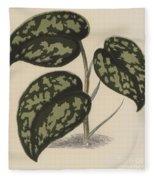 Pothos Argyraea Fleece Blanket