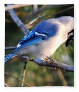 Praying Blue Jay Fleece Blanket