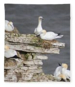 Precarious Nesting Bempton Gannets Fleece Blanket