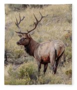Prize Bull Elk Fleece Blanket