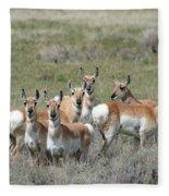 Pronghorn Harem Fleece Blanket