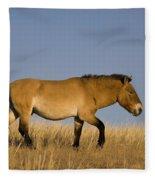 Przewalskis Stallion Fleece Blanket