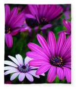Purple Daisies Fleece Blanket