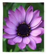 Purple Daisy Square Fleece Blanket