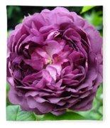Purple English Rose Fleece Blanket