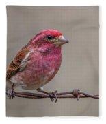 Purple Finch On Barbwire Fleece Blanket