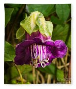 Purple Flower Of The Vine Known As Cathedral Bells Fleece Blanket