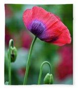 Purple Poppy Flower Fleece Blanket