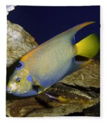 Queen Angelfish Fleece Blanket
