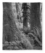 Quinault Rain Forest 3152 Fleece Blanket