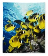 Raccoon Butterflyfish Fleece Blanket