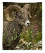 Ram Eating Fireweed Cropped Fleece Blanket