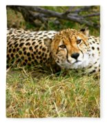 Reclining Cheetah Fleece Blanket