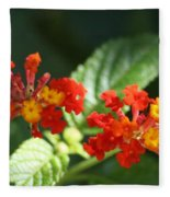 Red And Orange Lantana Fleece Blanket