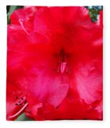 Red Azaleas Flowers 4 Red Azalea Garden Giclee Art Prints Baslee Troutman Fleece Blanket