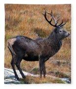 Red Deer Stag In Autumn Fleece Blanket