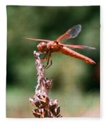 Red Dragonfly II Fleece Blanket