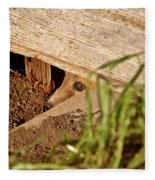 Red Fox Kit Peaking Out From Den Under Old Granary Fleece Blanket