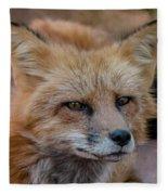 Red Fox Portrait 2 Fleece Blanket