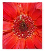 Red Gerber Daisy Fleece Blanket