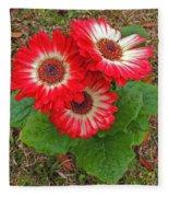 Red Gerbera Daisies Fleece Blanket