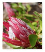 Red King Protea Bud Fleece Blanket