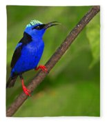 Red-legged Honeycreeper Fleece Blanket