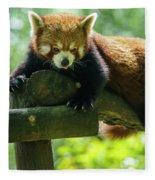 Red Panda Ailurus Fulgens Jerez De La Frontera Spain Fleece Blanket