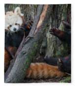 Red Panda Cubs At Play Fleece Blanket