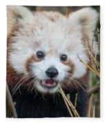 Red Panda Wonder Fleece Blanket
