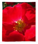 Red Rose Art Print Sunlit Roses Botanical Giclee Baslee Troutman Fleece Blanket