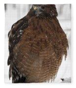 Red Shouldered Hawk Portrait Fleece Blanket