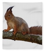 Red Squirrel Transparent Fleece Blanket