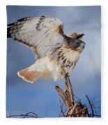 Red Tail Hawk Perch Fleece Blanket