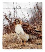 Red Tailed Hawk In The Field Fleece Blanket