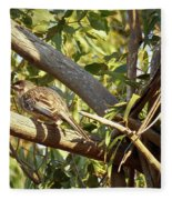 Red Wattlebird Australia Fleece Blanket