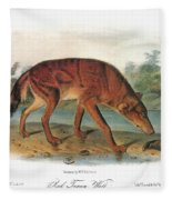Red Wolf (canis Lupus) Fleece Blanket