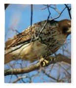Redtail Among Branches Fleece Blanket