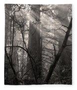 Redwood Mystery Fleece Blanket