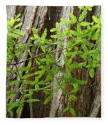 Redwood Tree Art Prints Baslee Troutman Fleece Blanket