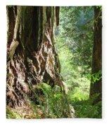 Redwood Tree Art Prints Redwoods Forest Fleece Blanket