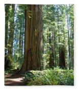 Redwood Trees Forest California Redwoods Baslee Fleece Blanket