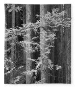 Redwoods Ir 0625 Fleece Blanket